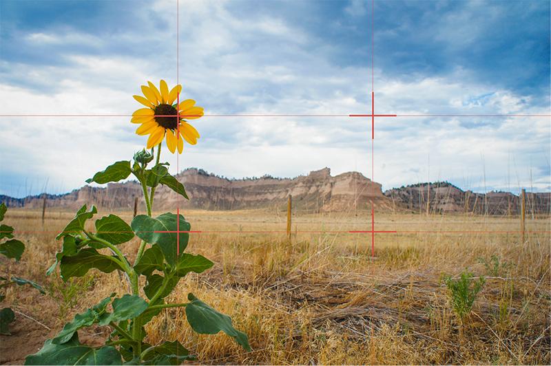 Nebraska-Flower-Rule-of-Thirds-01